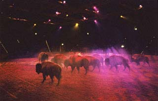 Buffalo Bill Wild West Show - Les bisons